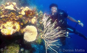 Coral grows horizontally and verticle and will always grow perpendicular to the surface on which it is attached