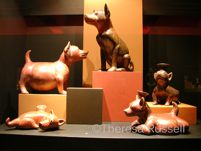 The Xoloitzcuintle was raised for food.